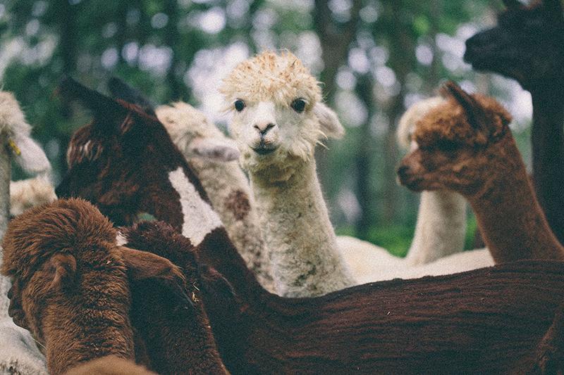 exotic_zoo_03