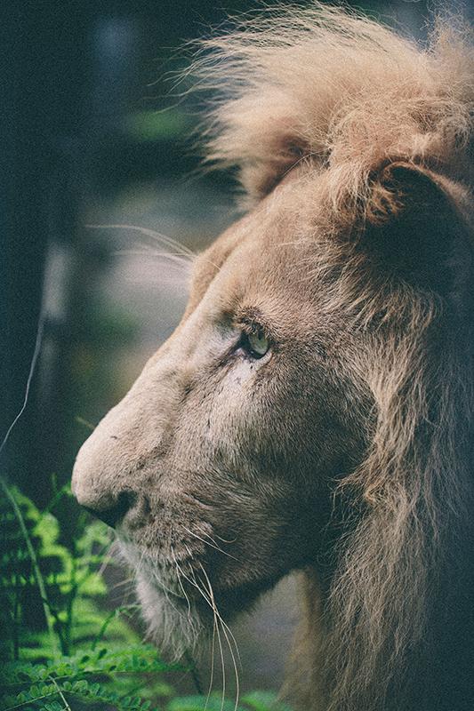 exotic_zoo_06
