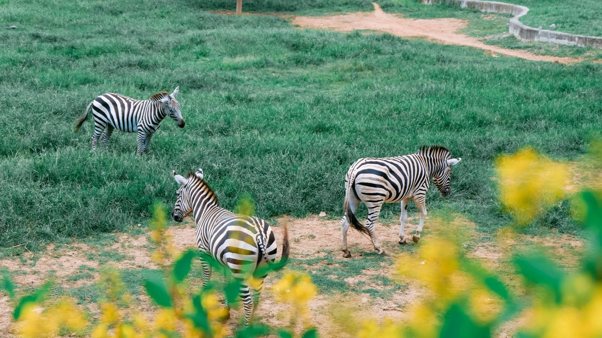 Bonanzacondo-activities-zoo 14
