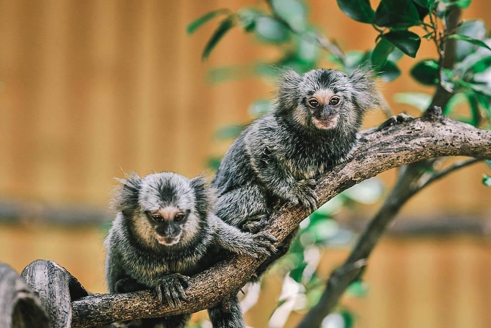 Bonanzacondo-activities-zoo 15