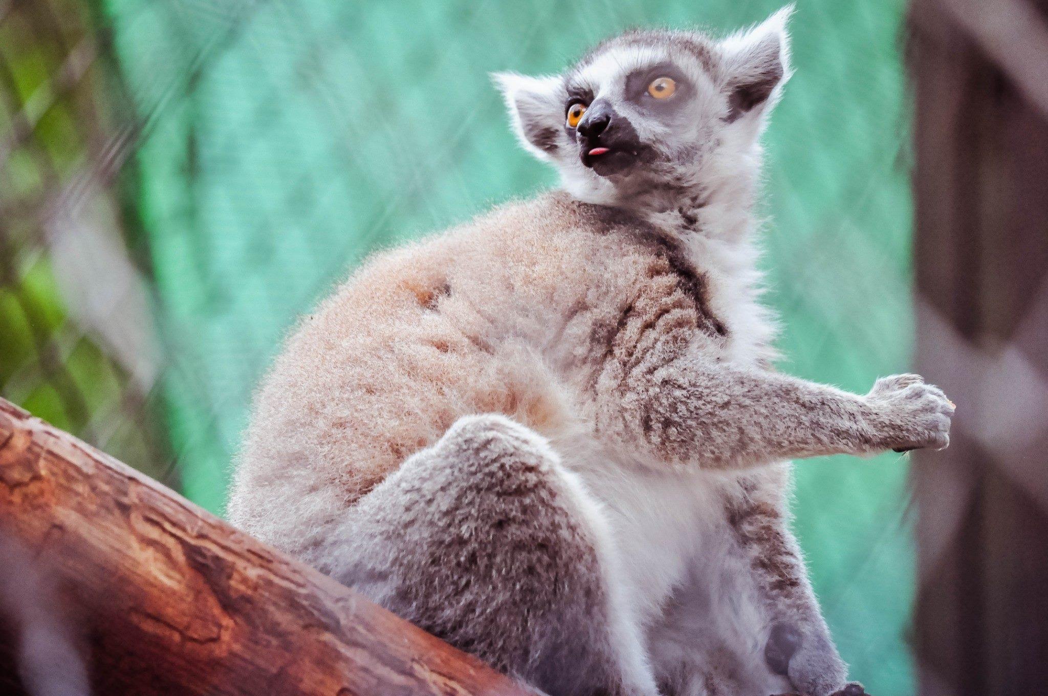 Bonanzacondo-activities-zoo 20