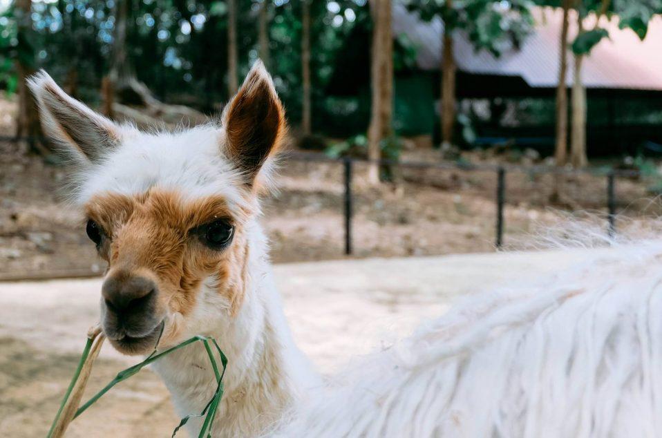Bonanzacondo-activities-zoo 12