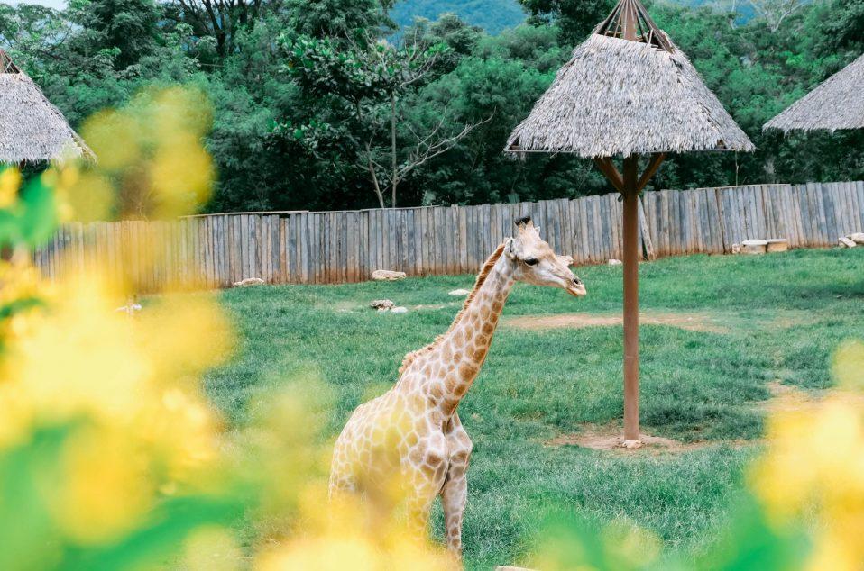 Bonanzacondo-activities-zoo 13