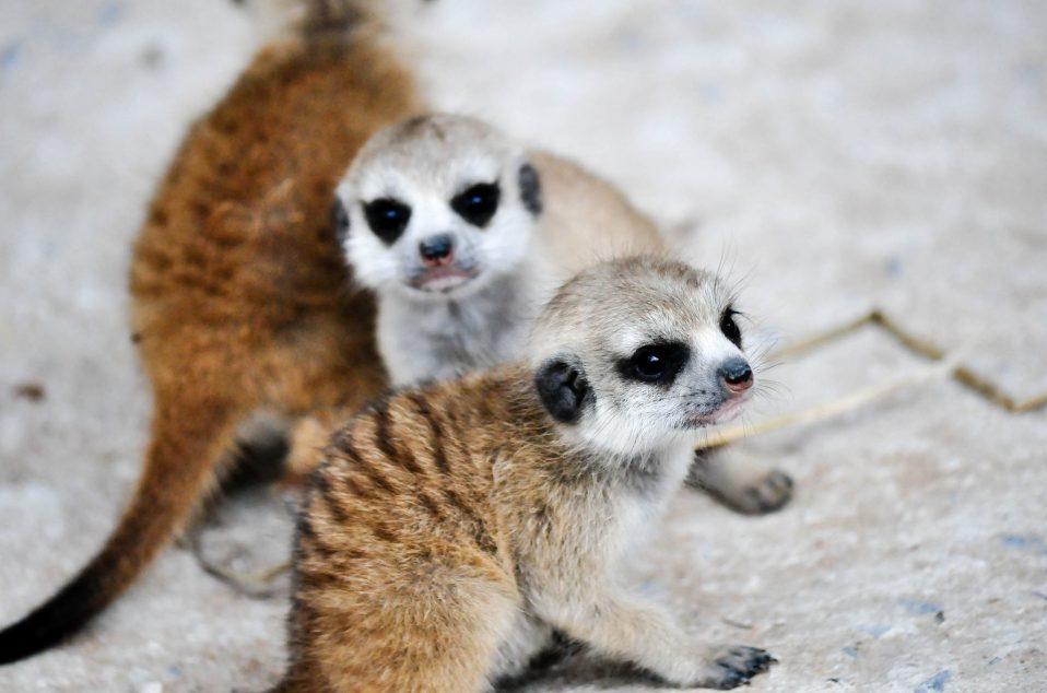 Bonanzacondo-activities-zoo 21