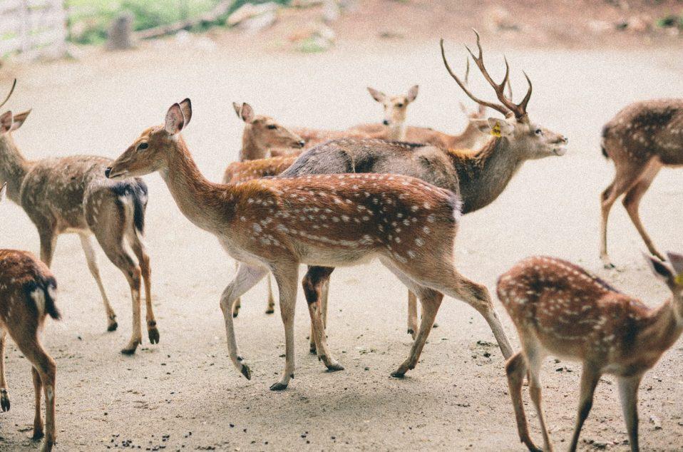 Bonanzacondo-activities-zoo