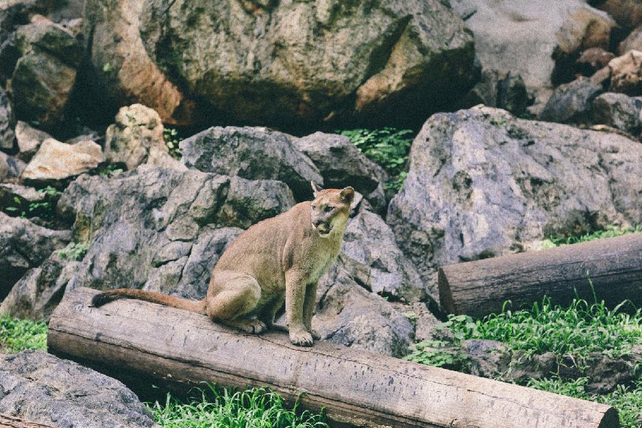 Parco condo khaoyai-facility-zoo-01
