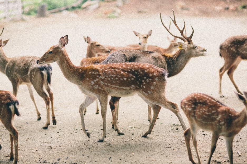 Parco condo khaoyai-facility-zoo1-01